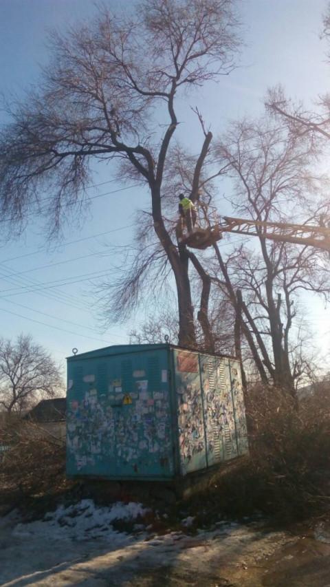 По улице Алексеенко убрали аварийный сухостой